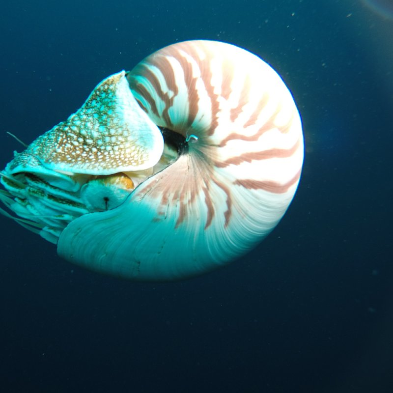 Skarby oceanu 1.jpg