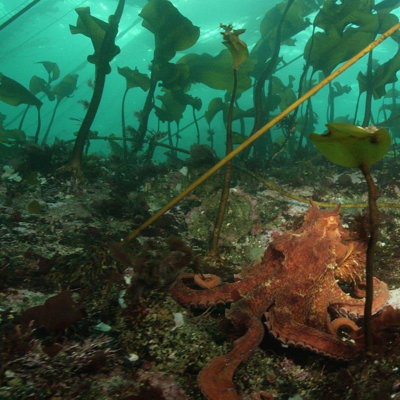 Skarby oceanu 7.JPG
