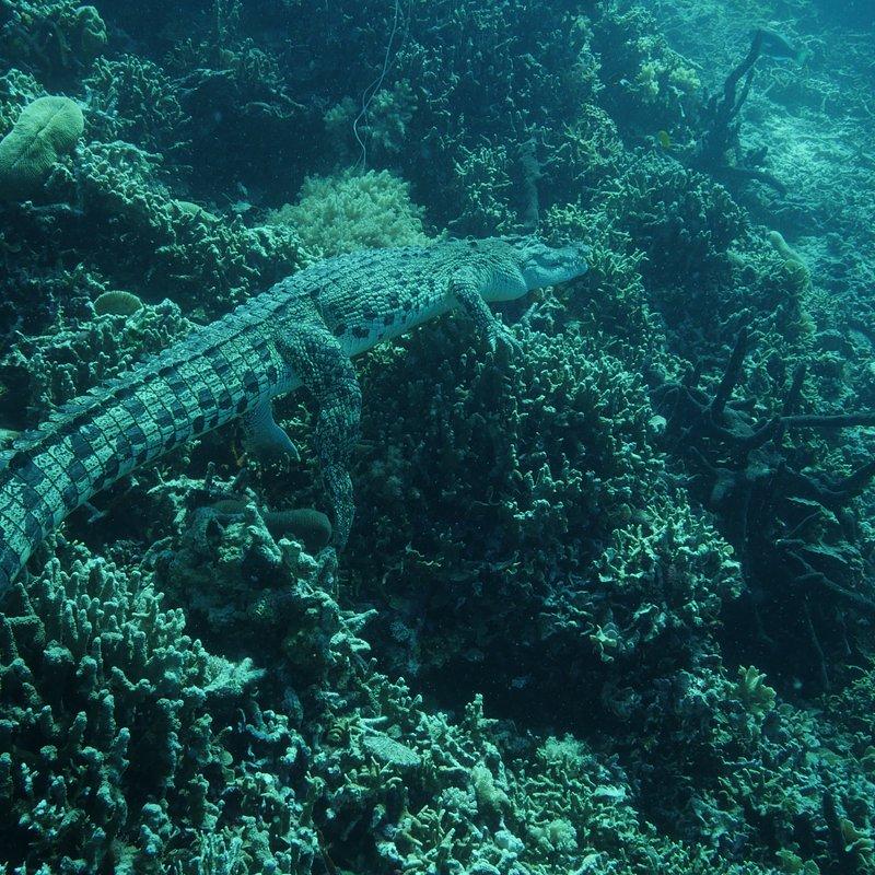 Skarby oceanu 6.jpg