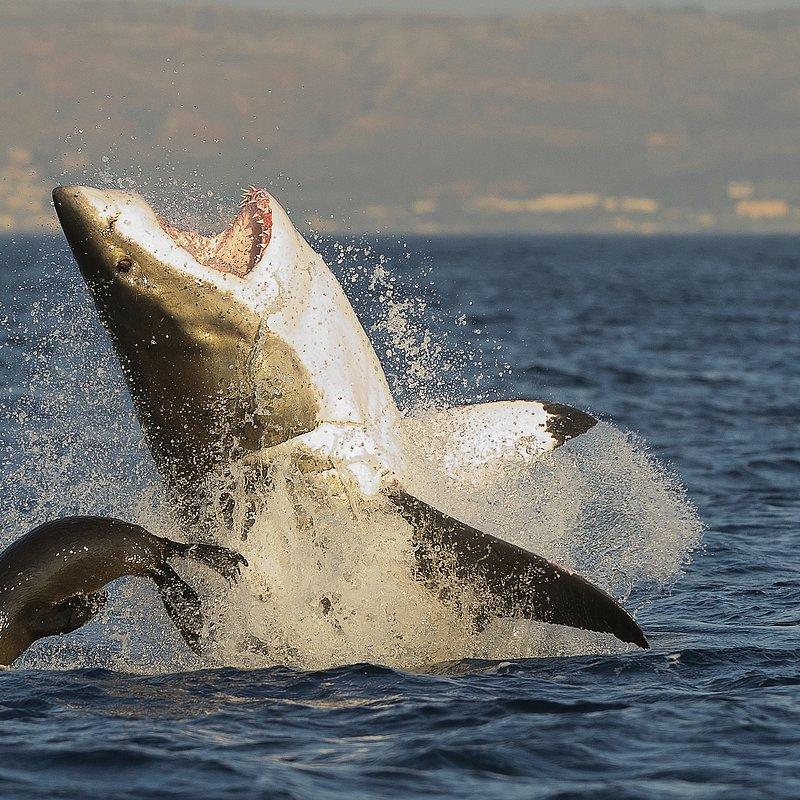 Najgroźniejsze rekiny Ameryki (10).jpg