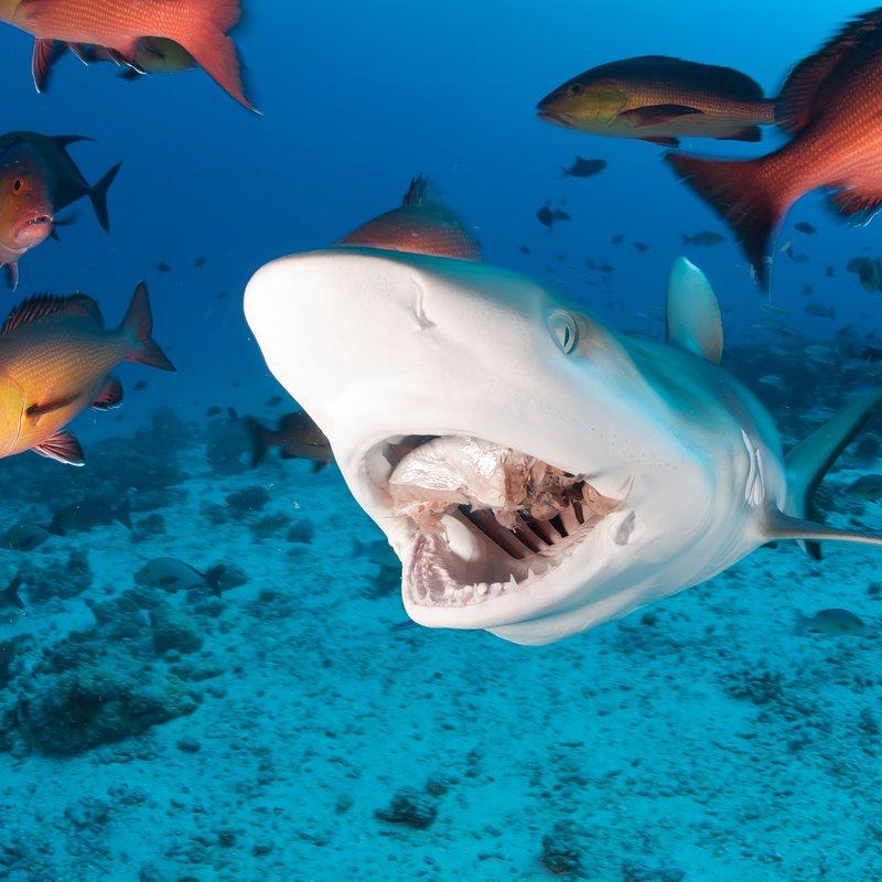 Najgroźniejsze rekiny Ameryki (7).jpg