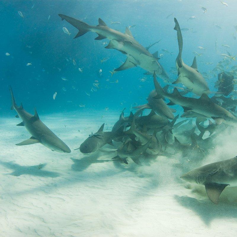 Najgroźniejsze rekiny Ameryki (5).jpg
