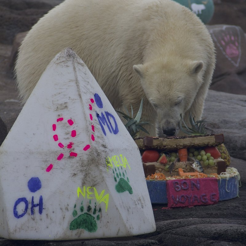 Sekrety Zoo 5.jpg