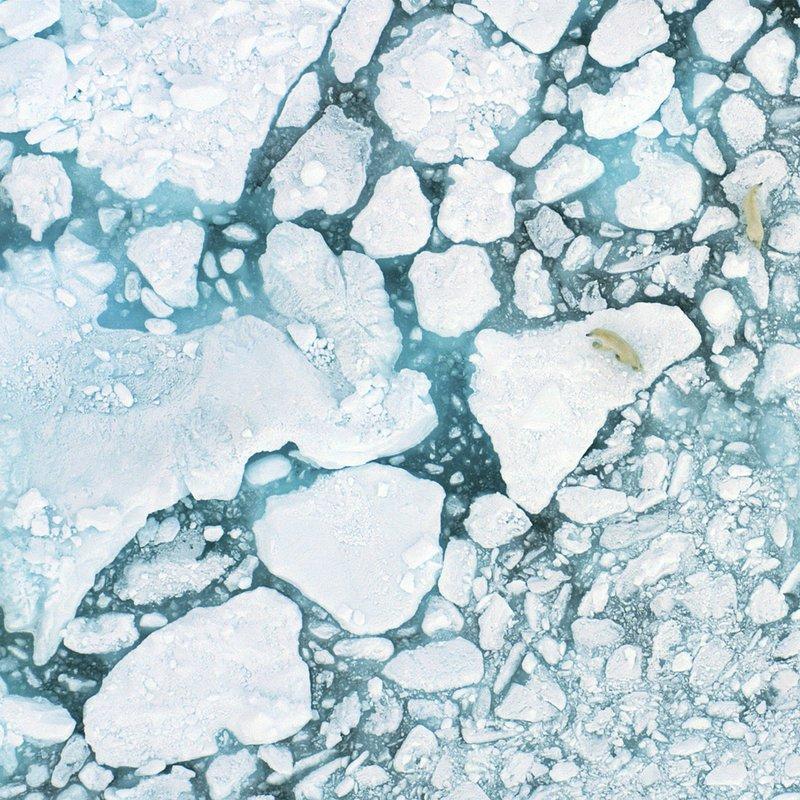 TheLastIce_Na ratunek Arktyce 2.jpg