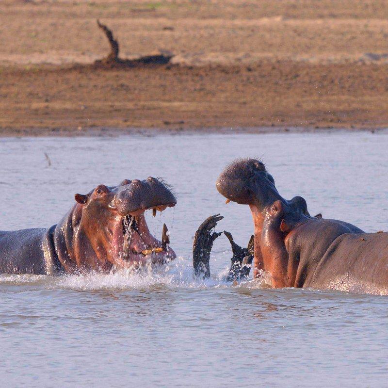 Najgrozniejsze zwierzeta Afryki (5).jpg