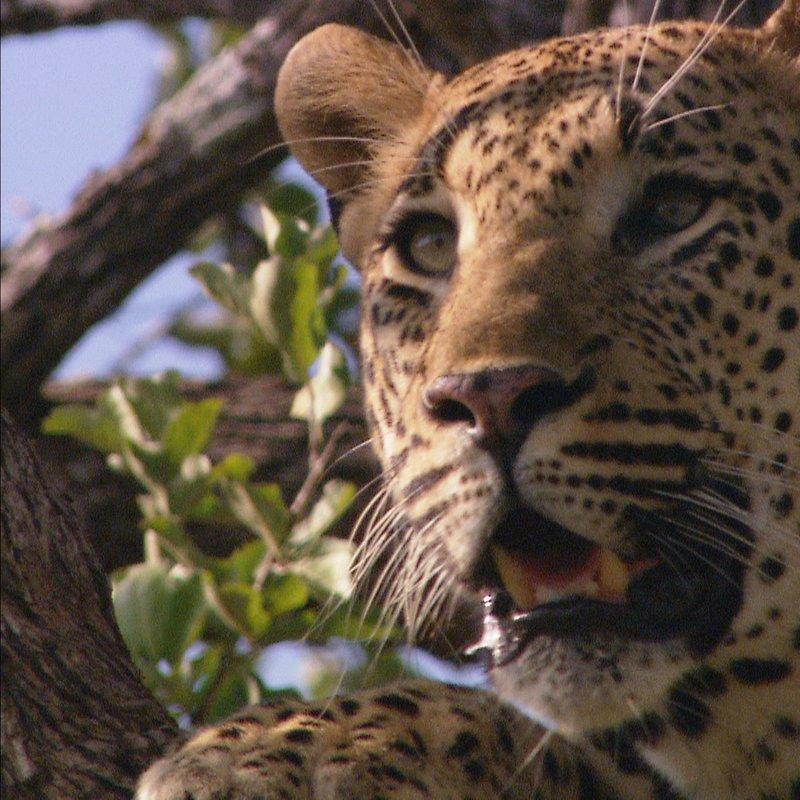 Najgrozniejsze zwierzeta Afryki (3).jpg