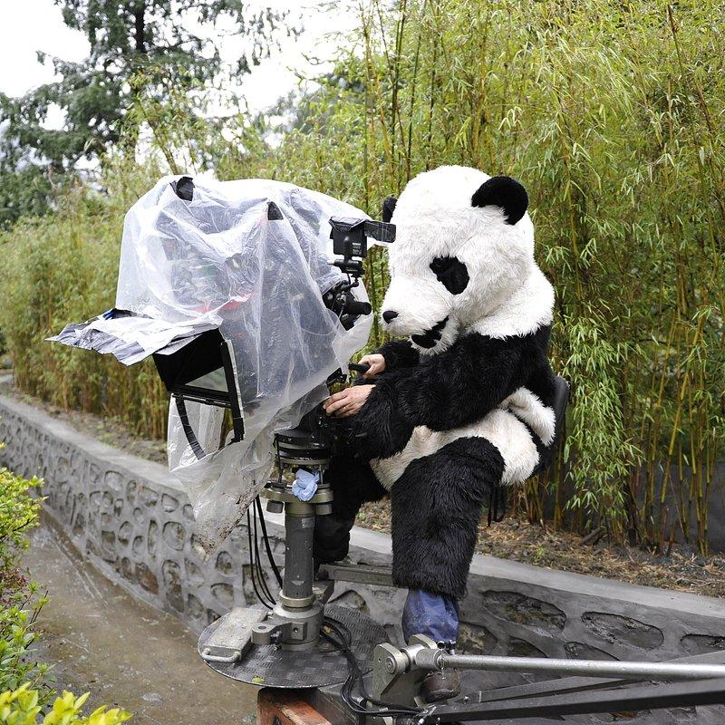 Pandy wielkie (4).jpg
