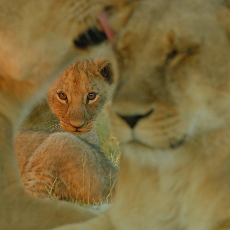 SavageKingdom_National Geographic Wilde (6).JPG