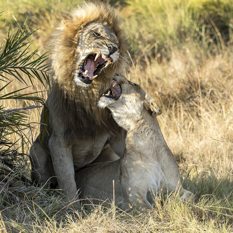 SavageKingdom_National Geographic Wilde (5).jpg