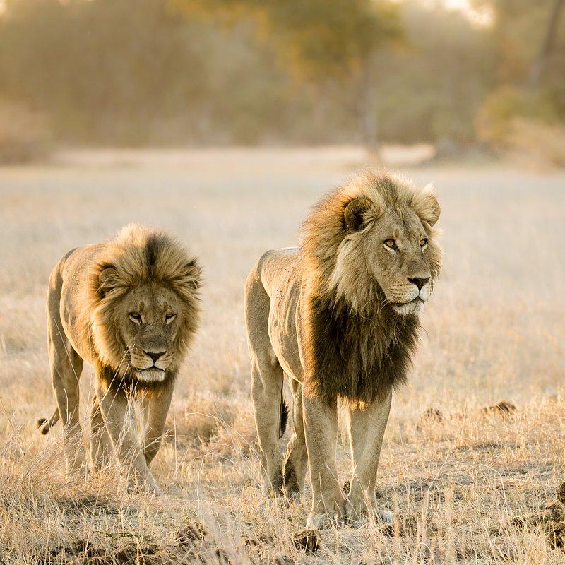 SavageKingdom_National Geographic Wilde (2).jpg