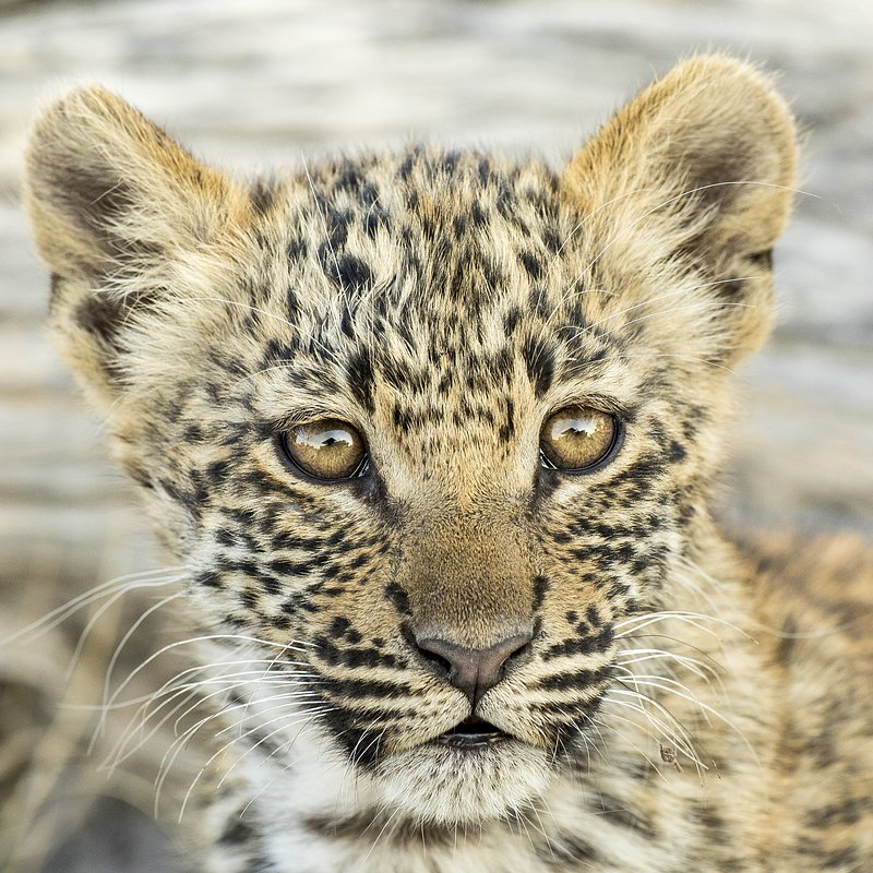 SavageKingdom_National Geographic Wilde (4).jpg
