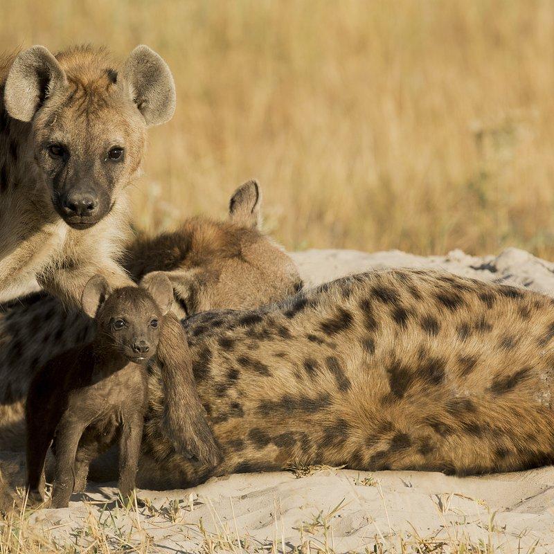 SavageKingdom_National Geographic Wilde (1).jpg