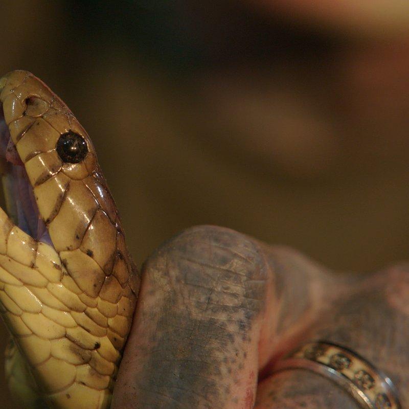 SnakesInTheCity_National Geographic Wild (2).jpg