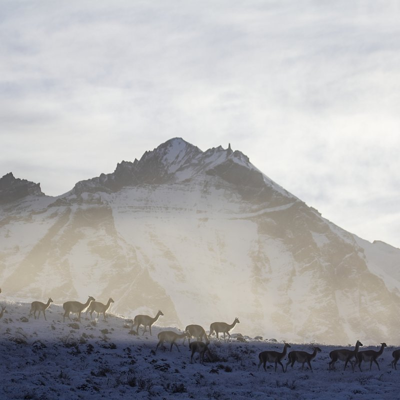 Puma na końcu świata walka o przetrwanie_National Geographic Wild (5).jpg