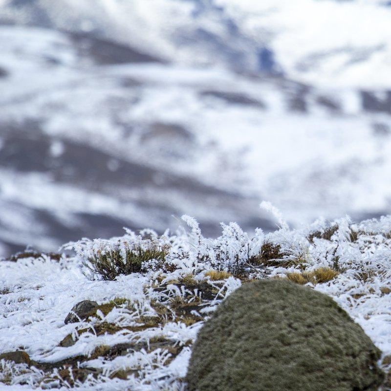 Puma na końcu świata walka o przetrwanie_National Geographic Wild (3).jpg