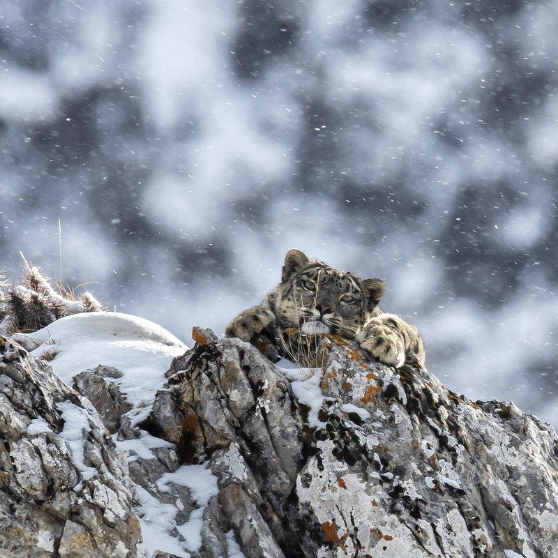 Królestwo ibisa śnieżnego_National Geographic Wilde (4).jpg