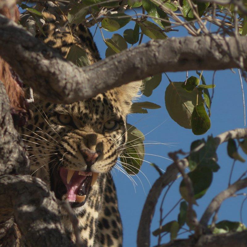 Pamiętnik lamparta_National Geographic Wild (3).JPG