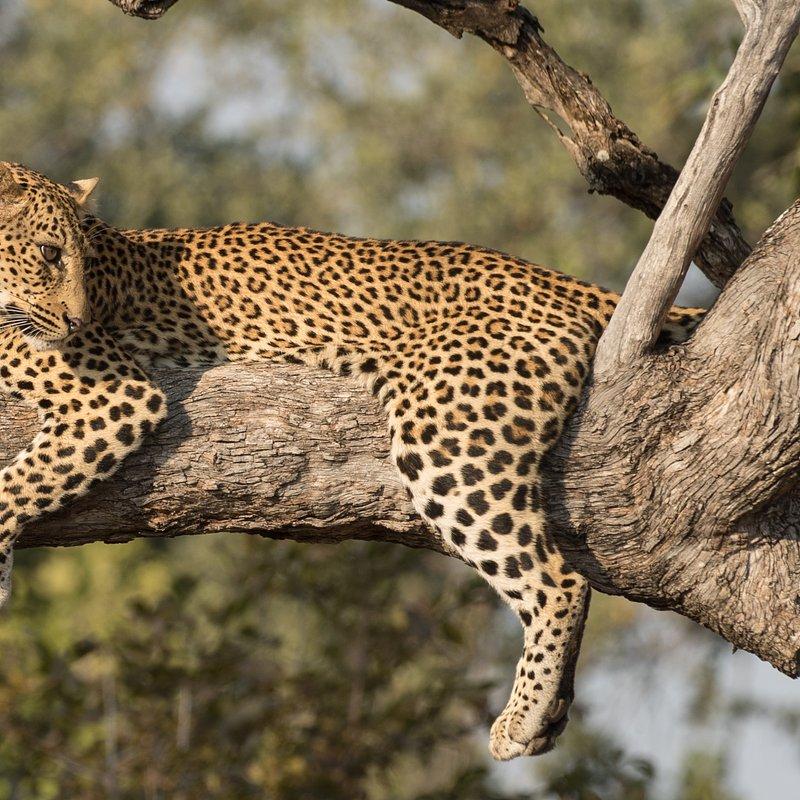 Pamiętnik lamparta_National Geographic Wild (1).jpg