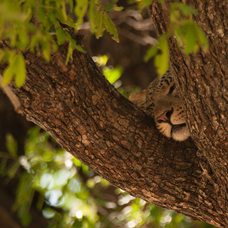 Pamiętnik lamparta_National Geographic Wild (6).jpg