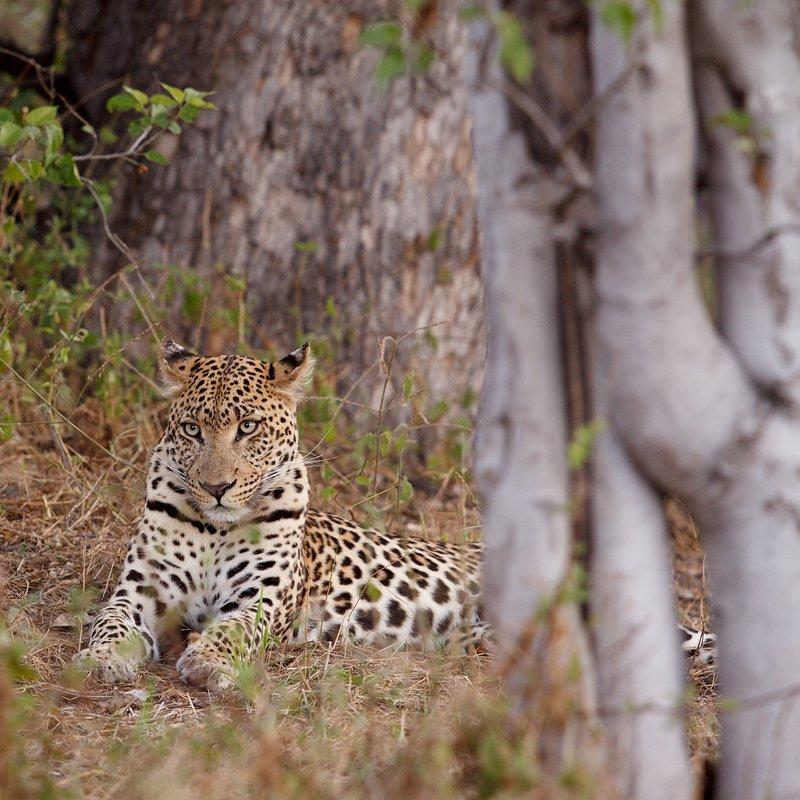 Pamiętnik lamparta_National Geographic Wild (7).jpg