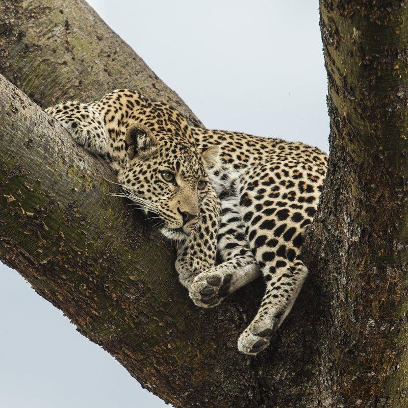 Zielonooka lamparcica_National Geographic Wild (6).JPG