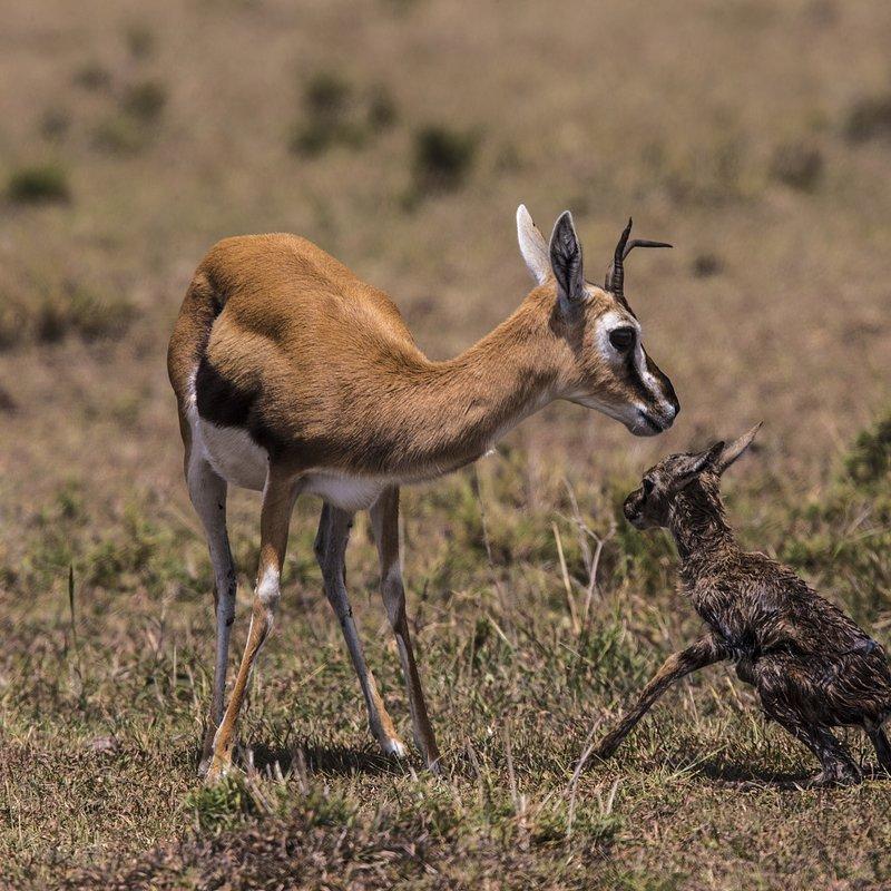 Zielonooka lamparcica_National Geographic Wild (4).JPG