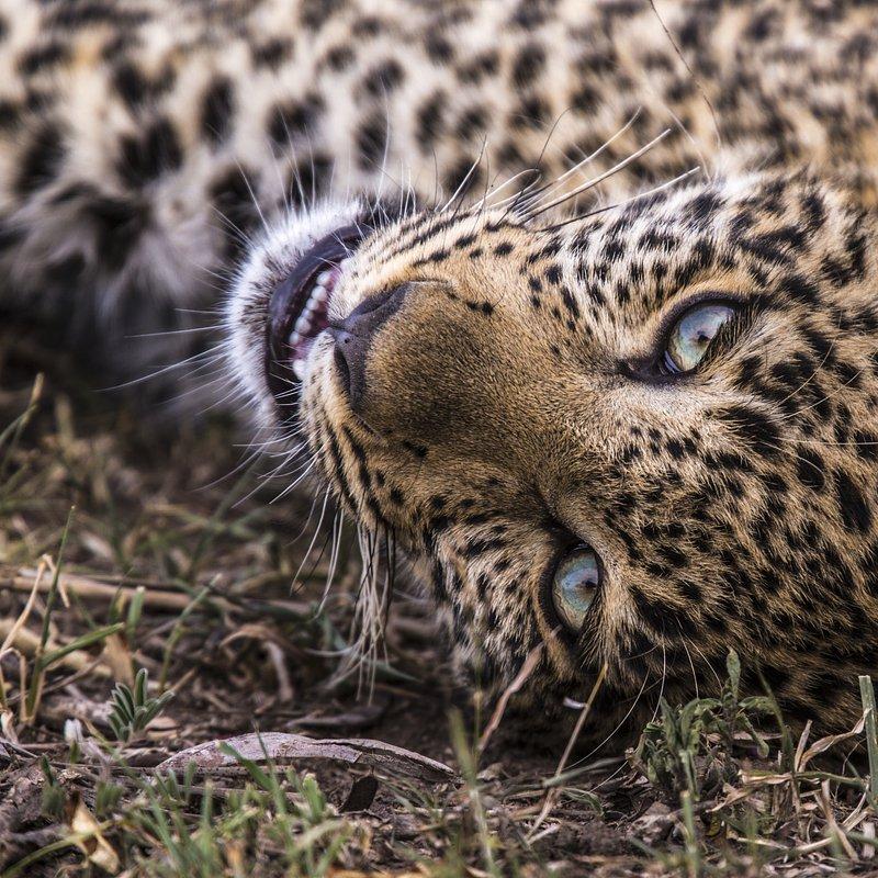 Zielonooka lamparcica_National Geographic Wild (9).JPG
