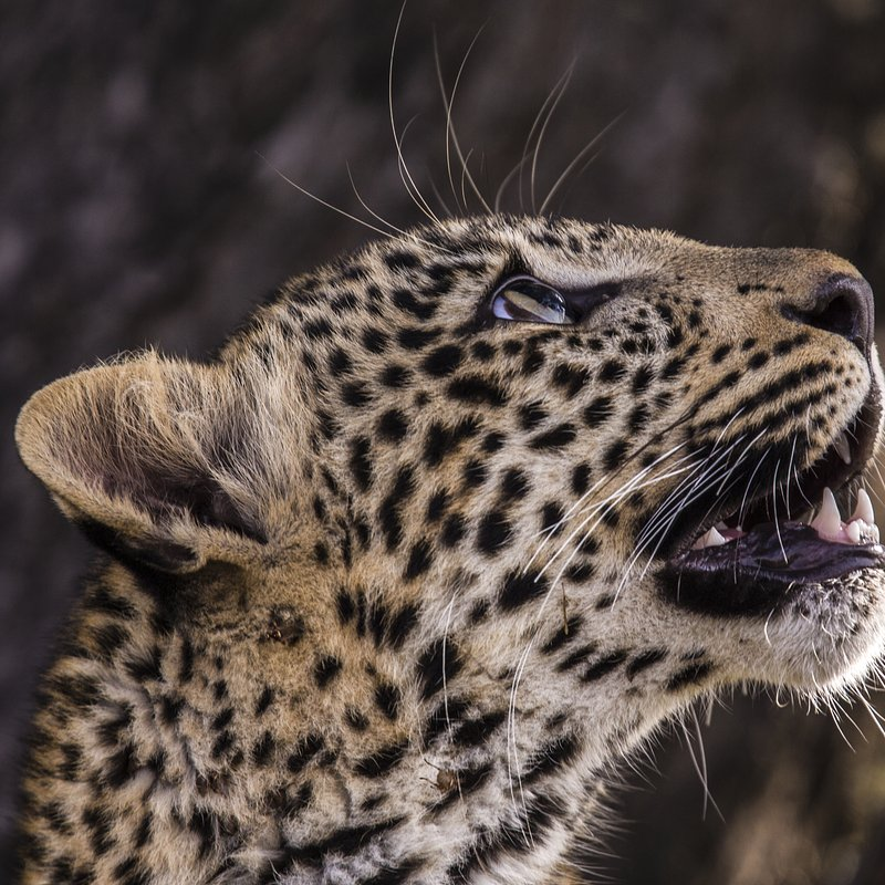 Zielonooka lamparcica_National Geographic Wild (7).JPG