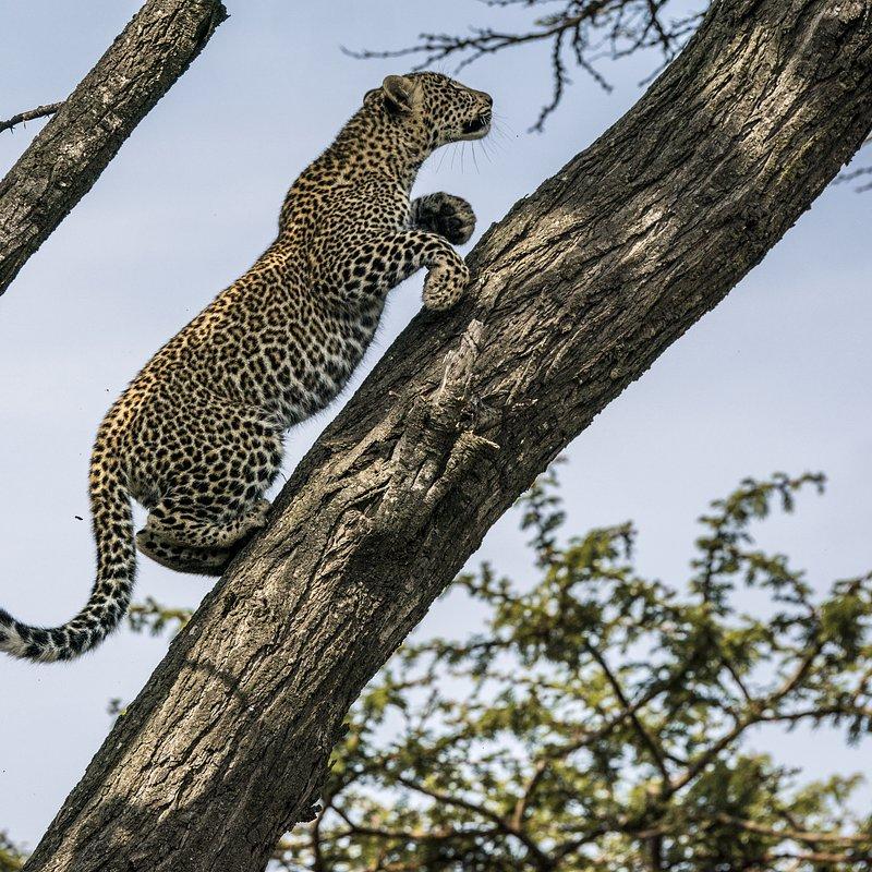 Zielonooka lamparcica_National Geographic Wild (10).JPG