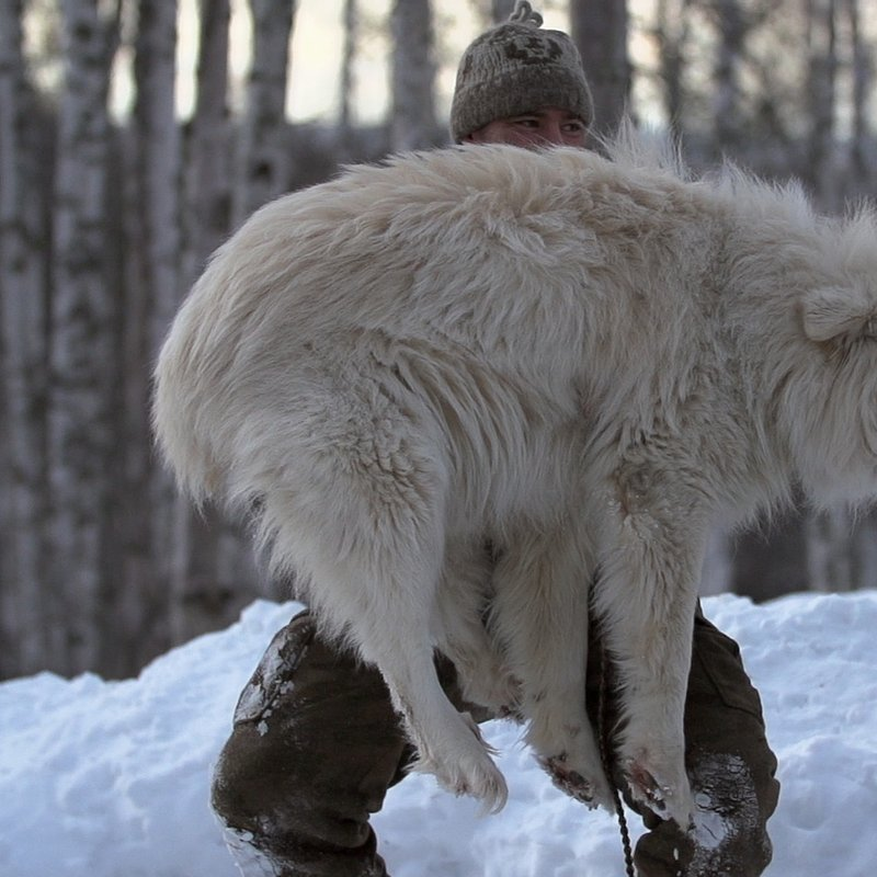 Alaska następne pokolenie_National Geographic (15).jpg
