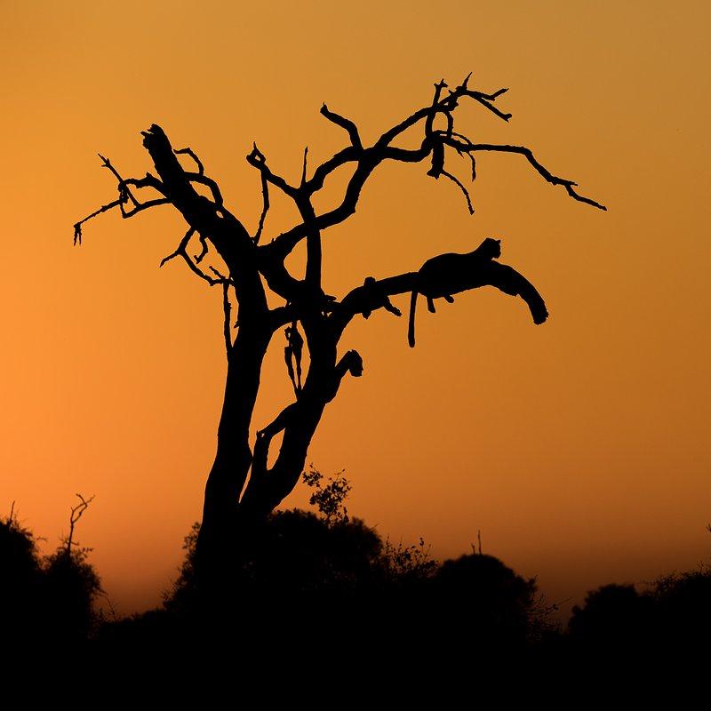Dziedzictwo lamparcicy_National Geographic Wild (1).jpg