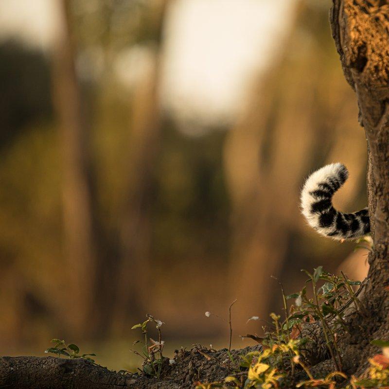 Dziedzictwo lamparcicy_National Geographic Wild (4).jpg