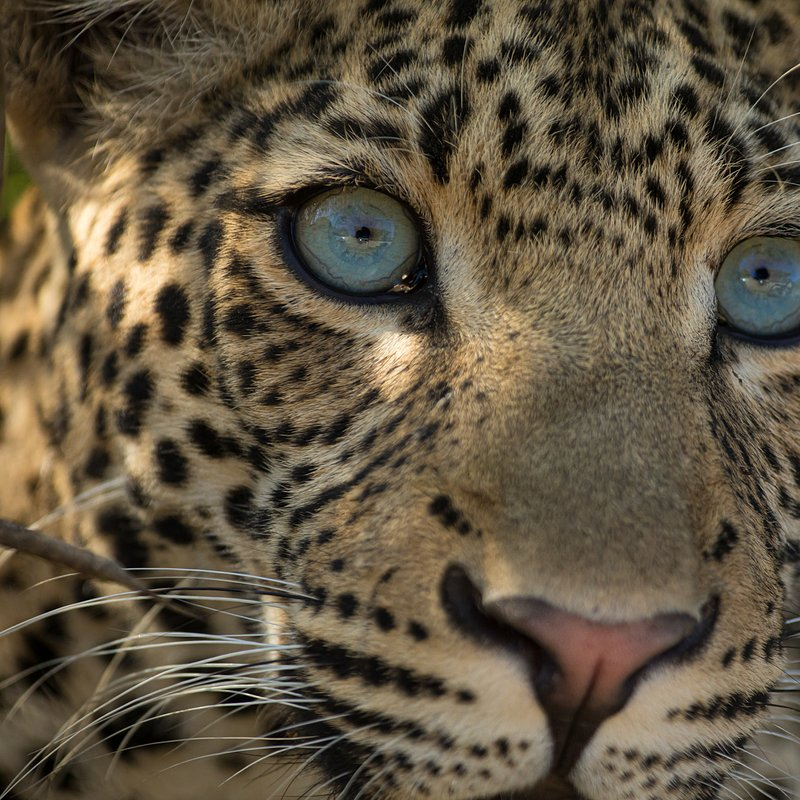 Dziedzictwo lamparcicy_National Geographic Wild (2).jpg