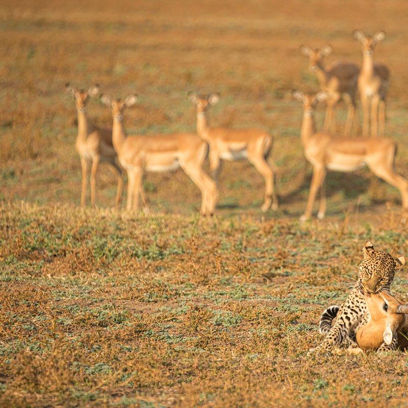 Dziedzictwo lamparcicy_National Geographic Wild (6).jpg
