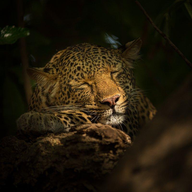 Dziedzictwo lamparcicy_National Geographic Wild (7).jpg