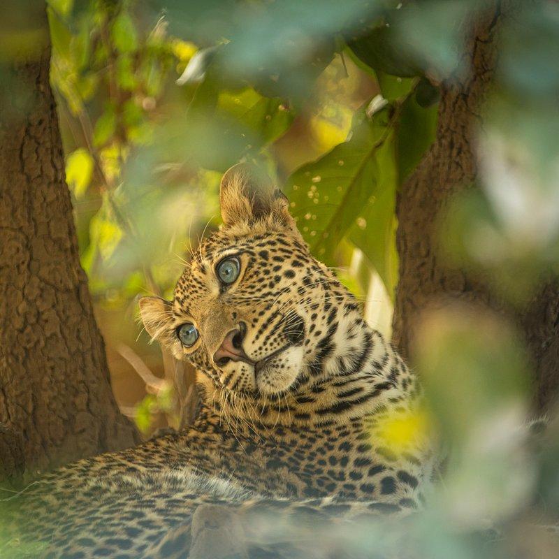 Dziedzictwo lamparcicy_National Geographic Wild (8).jpg