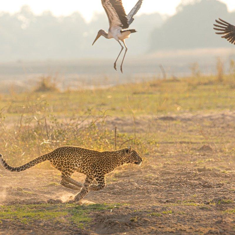 Dziedzictwo lamparcicy_National Geographic Wild (9).jpg