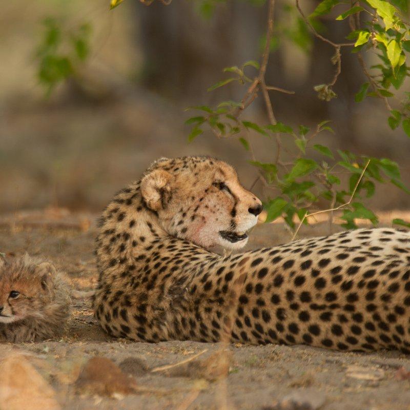 Królowa z Serengeti_National Geographic Wild (4).jpg