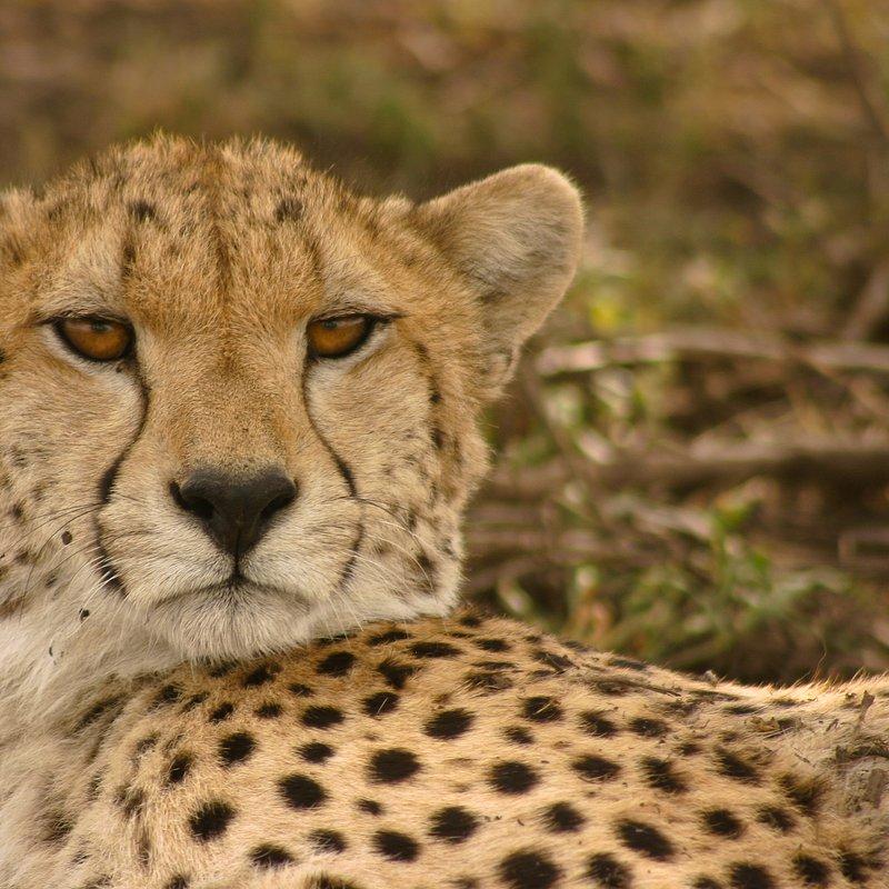 Królowa z Serengeti_National Geographic Wild (5).jpg
