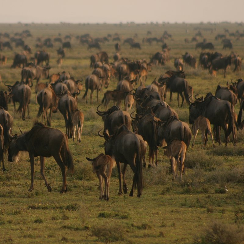 Królowa z Serengeti_National Geographic Wild (1).jpg