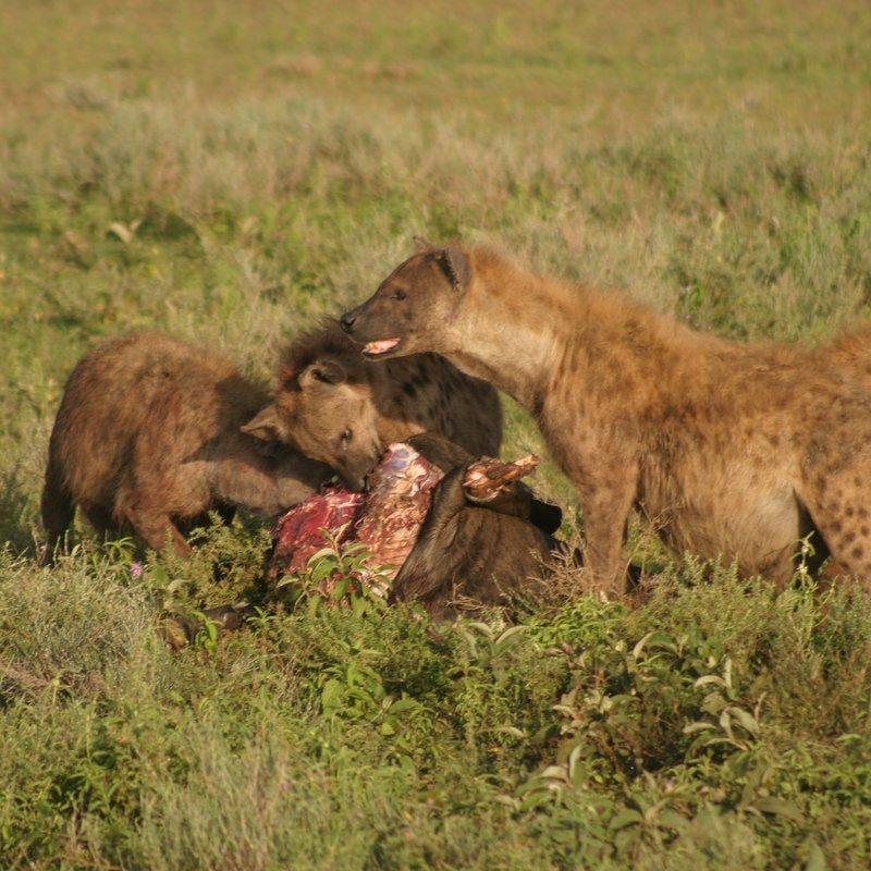 Królowa z Serengeti_National Geographic Wild (2).jpg