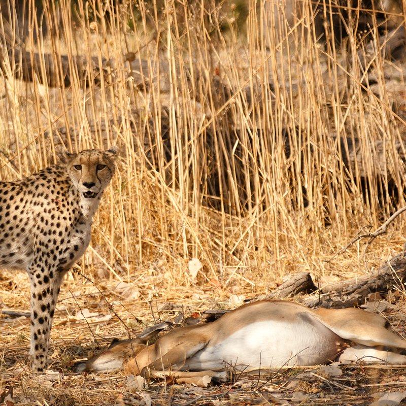 Królowa z Serengeti_National Geographic Wild (3).jpg