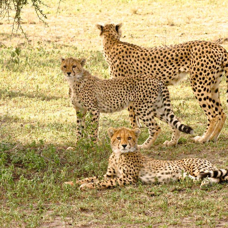 Królowa z Serengeti_National Geographic Wild (6).jpg