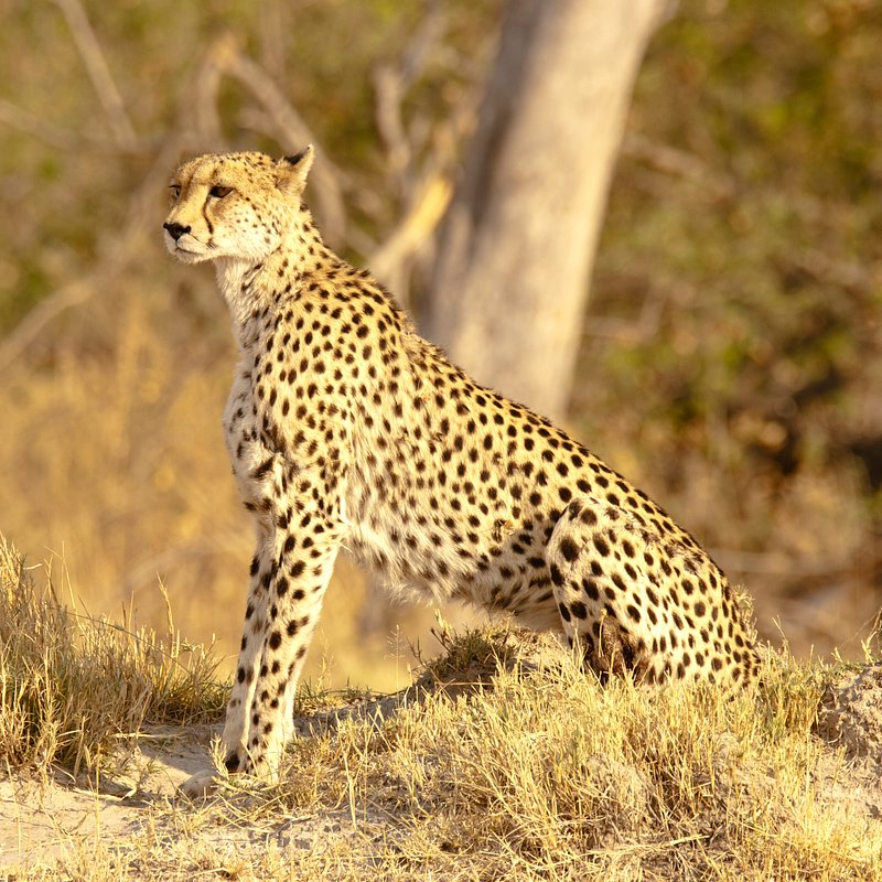 Królowa z Serengeti_National Geographic Wild (7).jpg