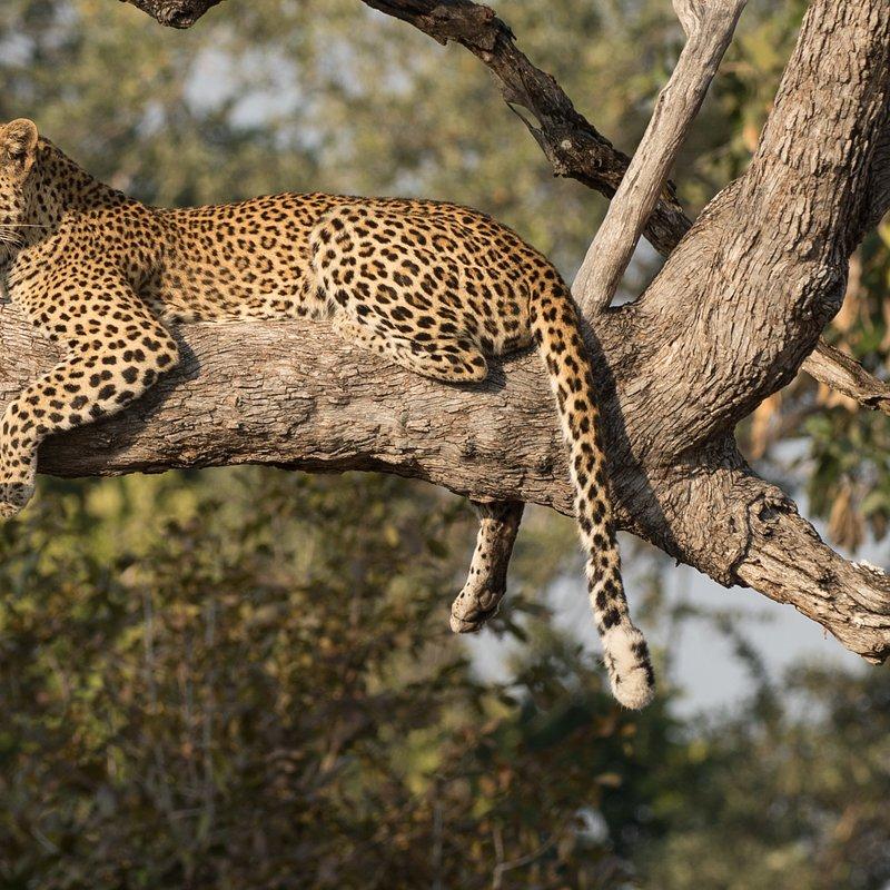 Hiena i lampart nietypowy sojusz_National Geographic Wild (4).jpg