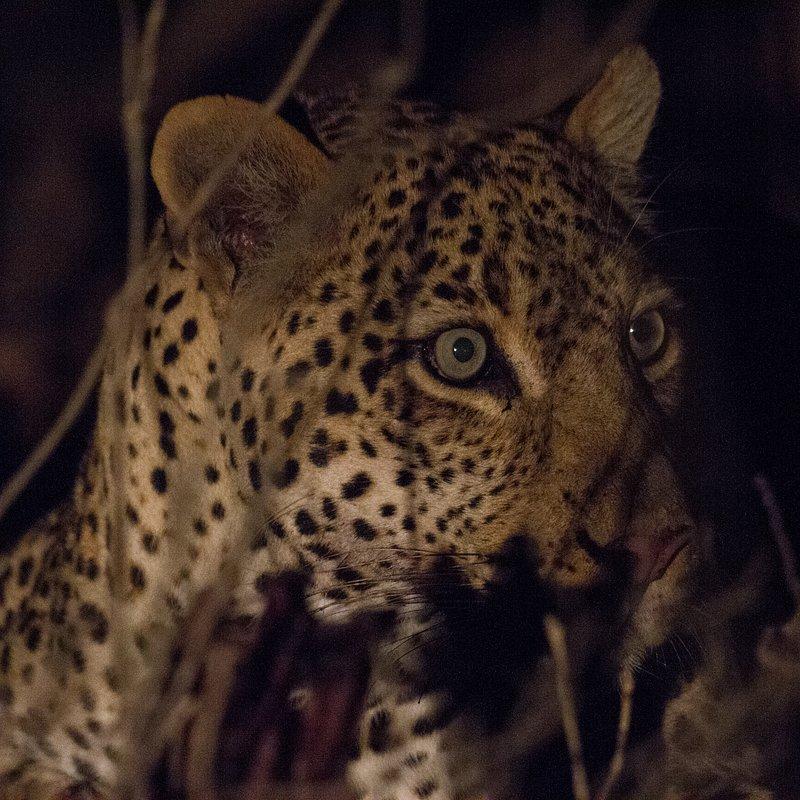 Hiena i lampart nietypowy sojusz_National Geographic Wild (3).jpg