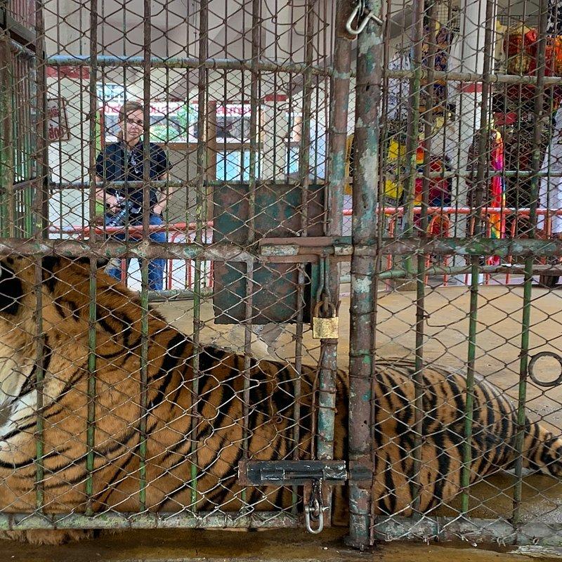 Ep107_Tigers_Trafficked_0069.jpg