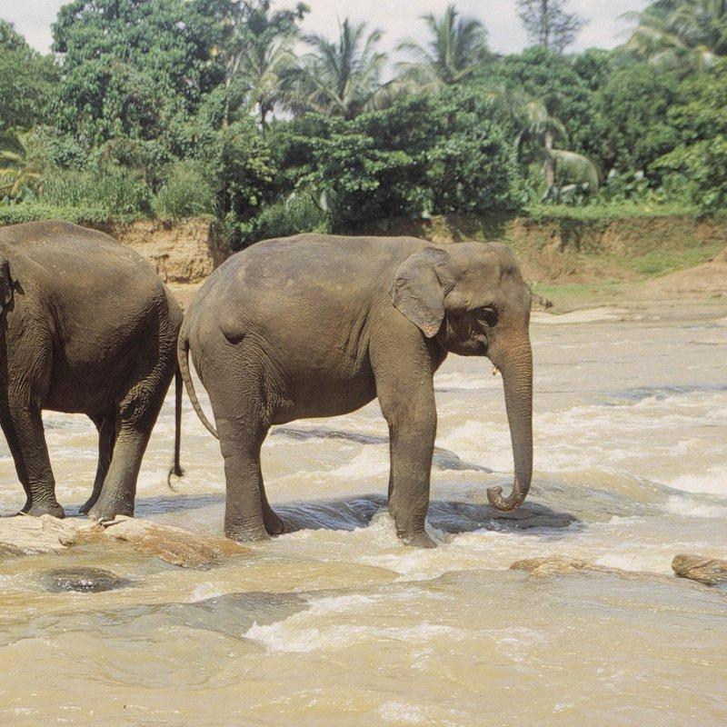 Tajemnice dzikiej Azji_National Geographic Wild (1).jpg