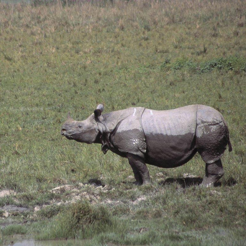 Tajemnice dzikiej Azji_National Geographic Wild (2).jpg