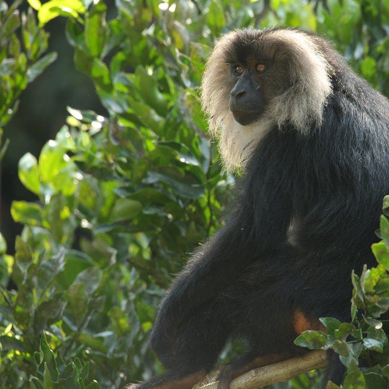 Tajemnice dzikiej Azji_National Geographic Wild (4).jpg